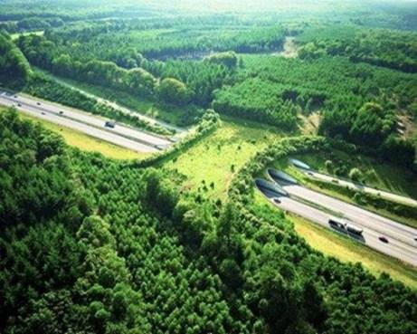 Quỹ hỗ trợ trồng cây xanh Rain Tees